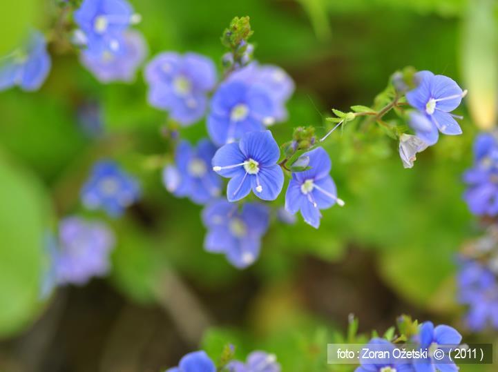 Cvijeće šume Žutice