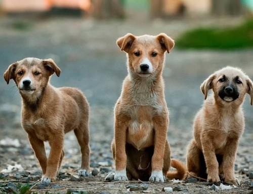 300.000 kuna gradovima i općinama za mikročipiranje pasa