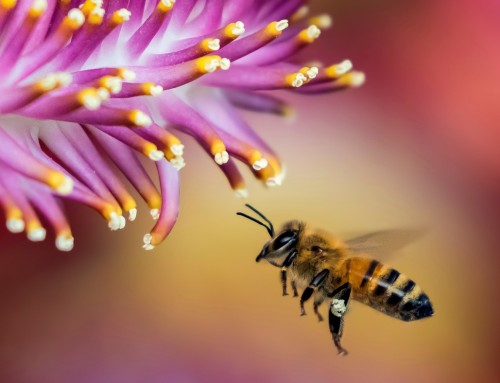 Pčelinji proizvodi i njihovo korištenje u prehrani i apiterapiji
