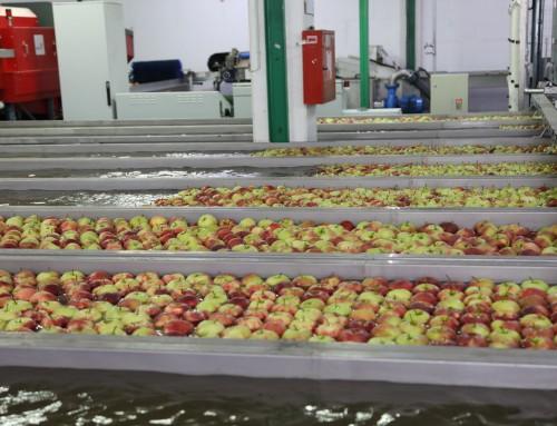 Otvorena nova linija za sortiranje jabuka