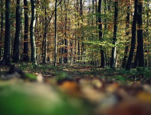 Održan sastanak na temu obilježavanja pješačkih staza šumom Marča