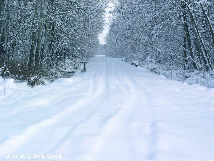 Zima u šumi Žutici