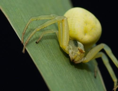 Ljetna drobilica – Strah od pauka