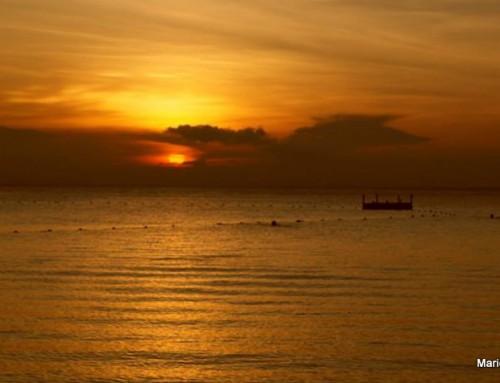 Malezija – Otok Perhentian, Camron Highlands, leptiri, jagode…