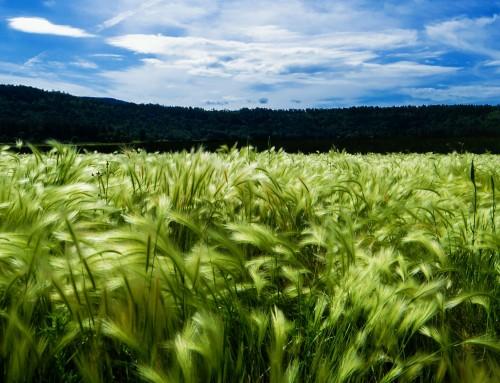Zagrebačka županija vodeća po izdvajanju za poticaje poljoprivrednicima
