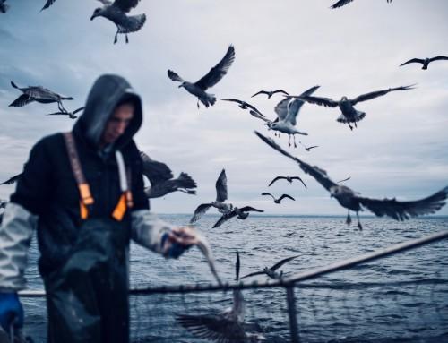 Digitalno ribarstvo postaje stvarnost – otvoren Portal gospodarskog ribolova