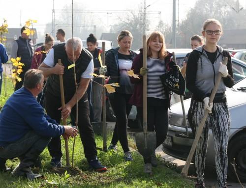 Ivanić-Grad bogatiji za 40 mladih stabala