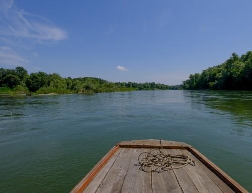 Dan rijeke Save